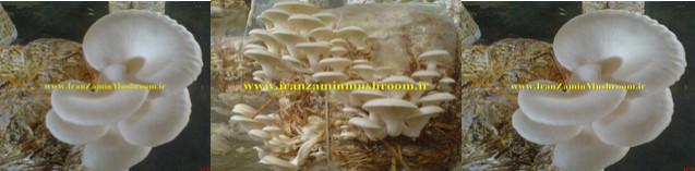 http://vmehdizadeh.persiangig.com/IRANZAMIN-PIC/7.jpg