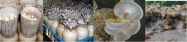 http://vmehdizadeh.persiangig.com/IRANZAMIN-PIC/9.jpg