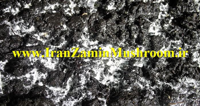 http://vmehdizadeh.persiangig.com/IRANZAMIN-PIC/www.IranZaminMushroom%20%2814%29.jpg